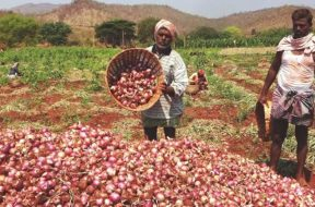 onion-and-farmers